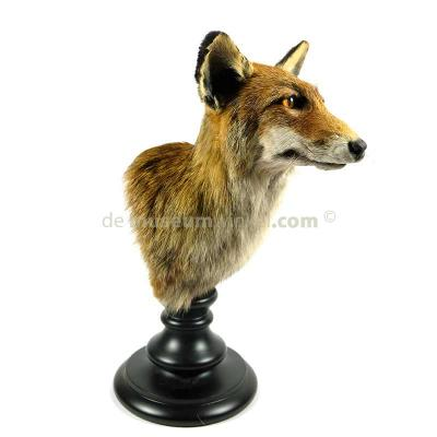 Mounted fox (trophy) 1