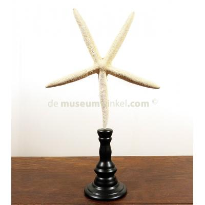 White seastar  on stand