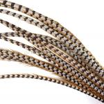Reeves's pheasant feathers 90-100 cm
