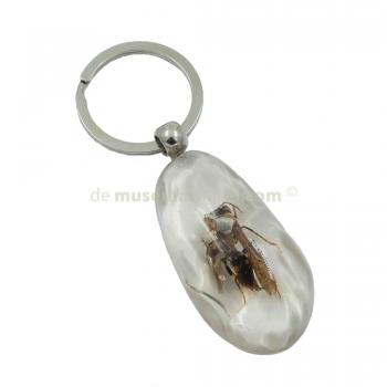 Keychain insect in resin