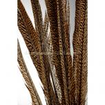 Golden Pheasant feathers circa 55-80 cm (5 pieces)