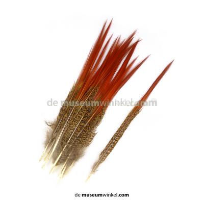 Golden pheasant feathers red 20-30 cm (5 pieces)