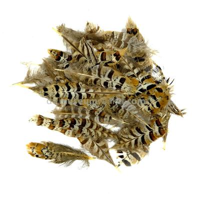 Reeves's Pheasant feathers 10 cm -  150 pieces