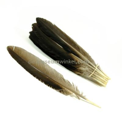 Peacock wing feather (per 10 ) 35-45 cm