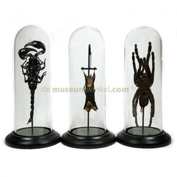 Glass dome with scorpion