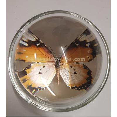 Glass loupe sphere with mounted butterfly
