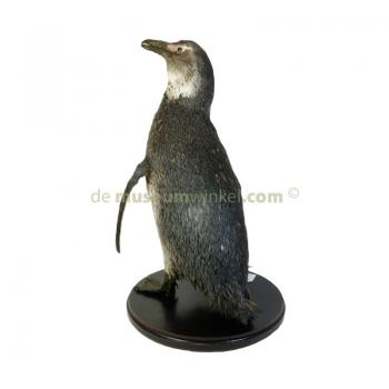 Mounted penguin