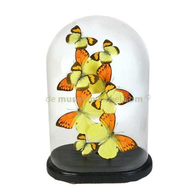 Dome with yellow butterfly