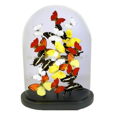 Dome with mounted yellow, white and red butterflies