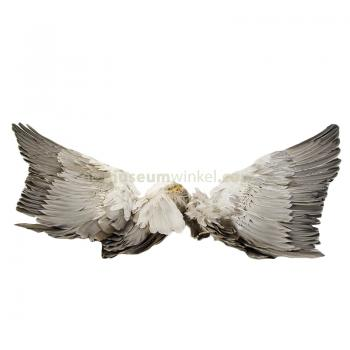 Wings of a goose