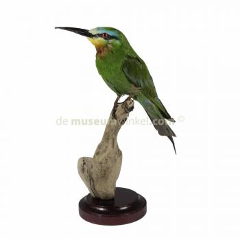 Mounted blue-cheeked bee-eater (B)