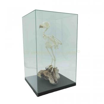 Mounted Indian eagle-owl in display case