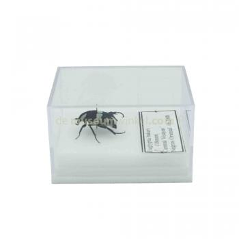 Insect in plastic box - small