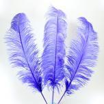 Struisvogel veer (paars) 70 - 80 cm (F13)