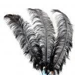Struisvogel veer (zwart) 70 - 80  cm