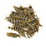 Koningsfazant dek veren 10 cm per 150 stuks