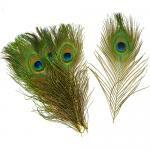 Pauwenveren ogen (20 stuks) ± 25-30 cm