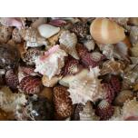 Mix of shells