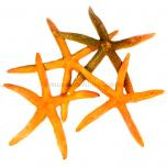 Zeester oranje