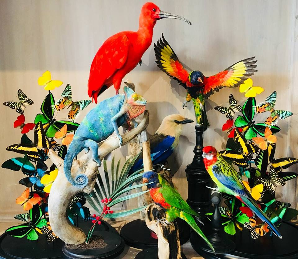 Taxidermy & Colour Explosion