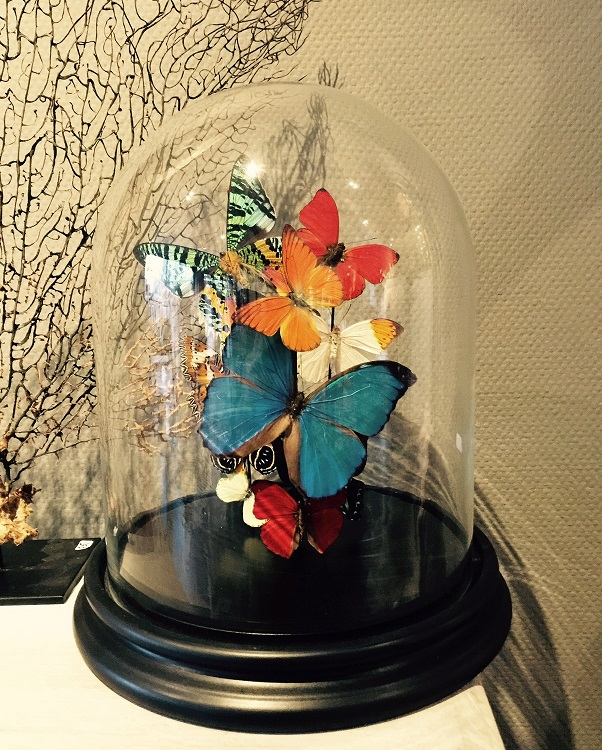 Mounted butterflies in your interior