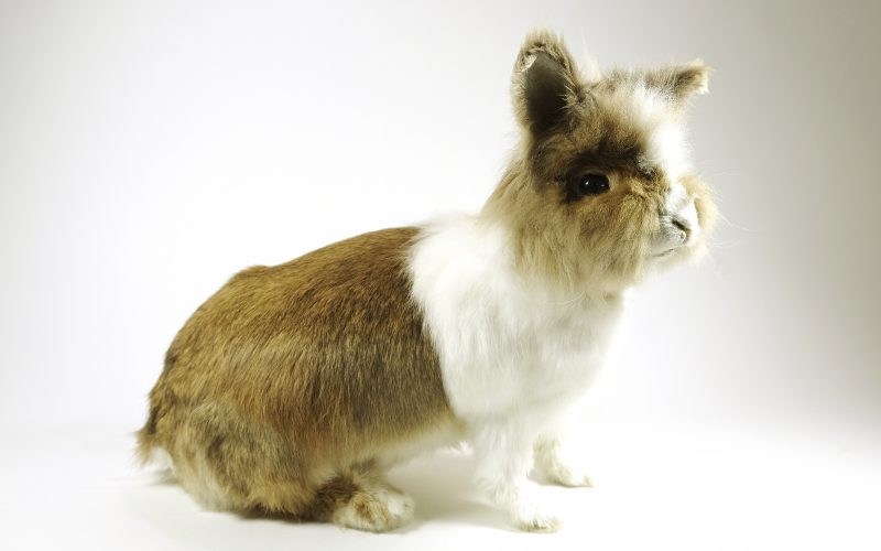 Dood konijn schrijft brief aan Nijmeegse Museumwinkel
