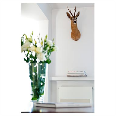 Modern decor with mounted animals