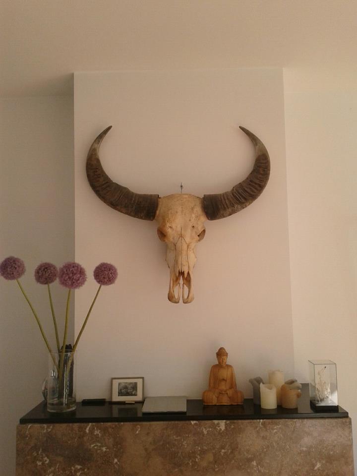 Schedel waterbuffel boven de schouw for Schedel decoratie