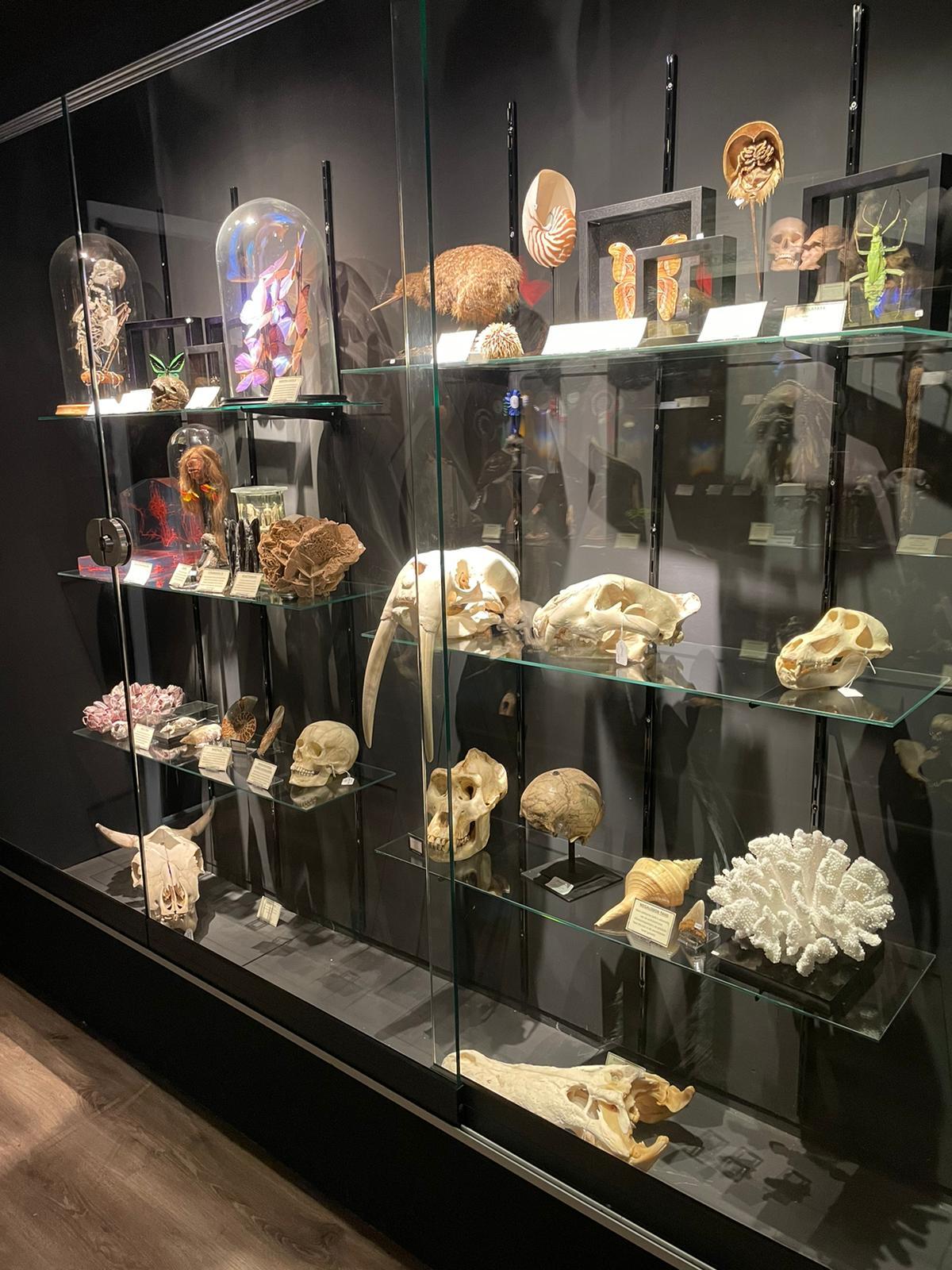 Opgezette dieren & opgezette vlinders in privé collectie van De Museumwinkel.com