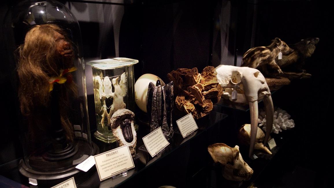 Natuurhistorisch museum De Museumwinkel.com