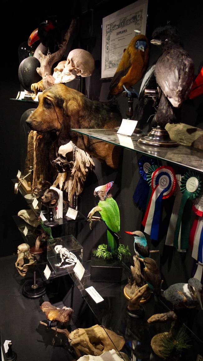 Opgezette dieren in De Museumwinkel.com